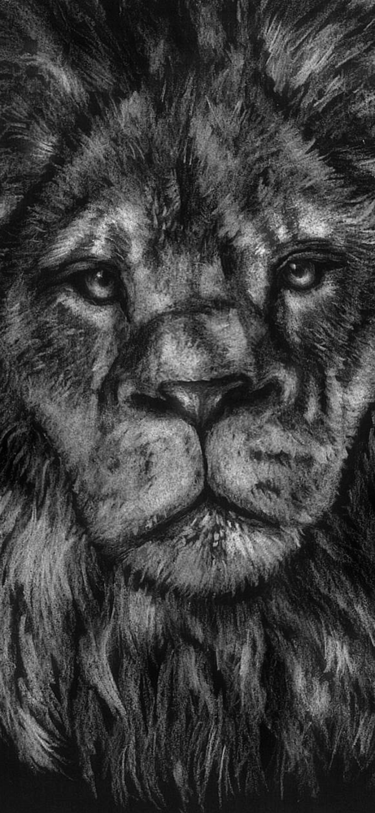 iPhone wallpapers illustration lion Fonds d'écran iPhone du 03/02/2020