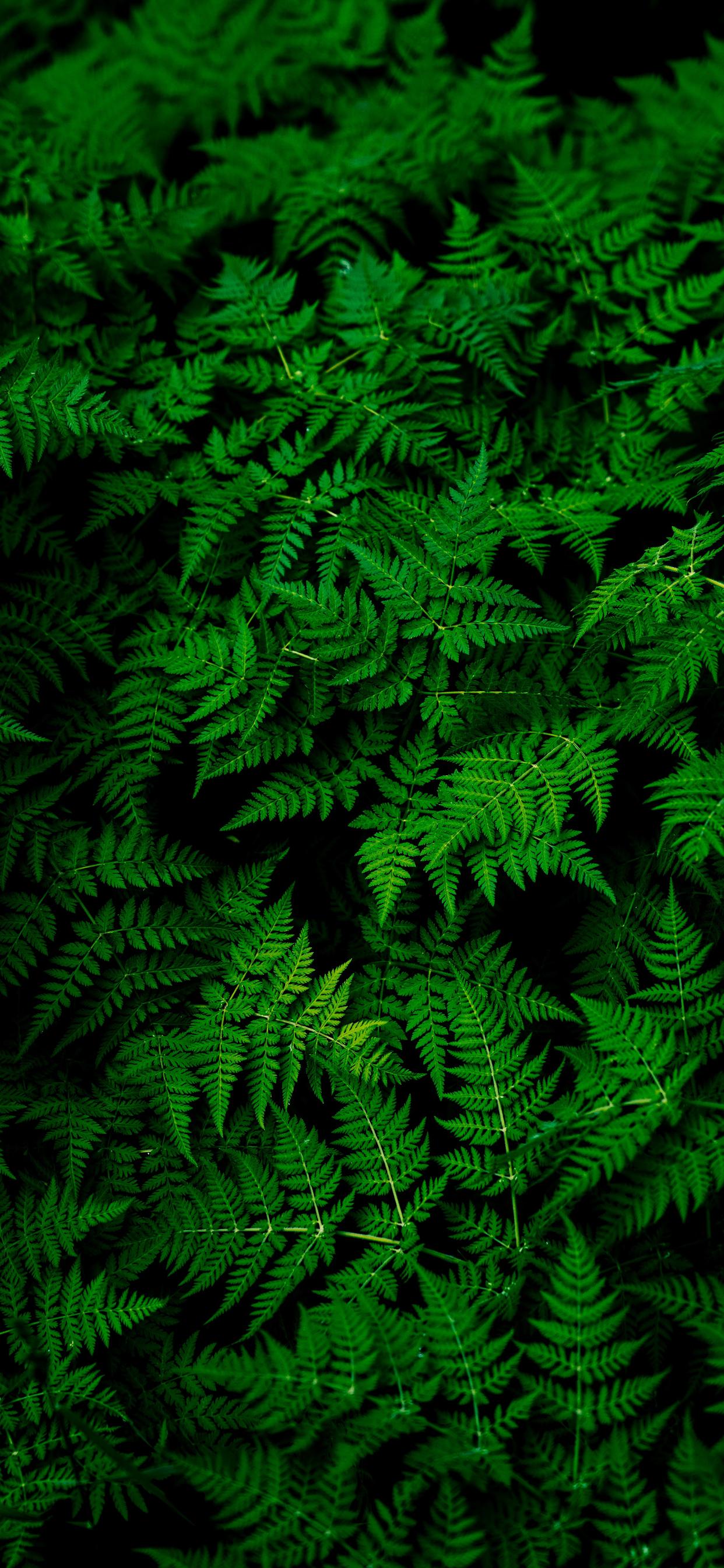 iPhone wallpapers plants stockholm sweden Plants