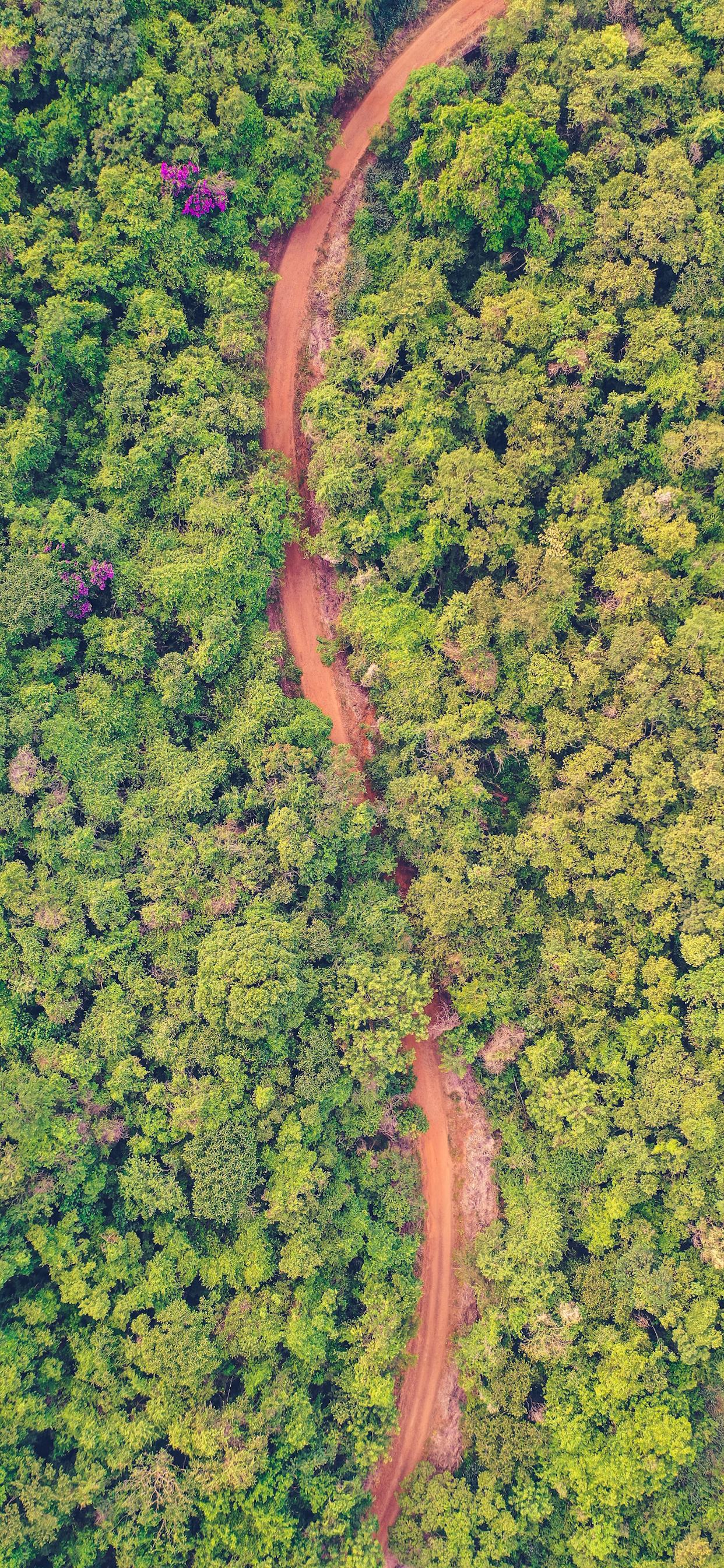 iPhone wallpapers road forest aerial Fonds d'écran iPhone du 10/03/2020