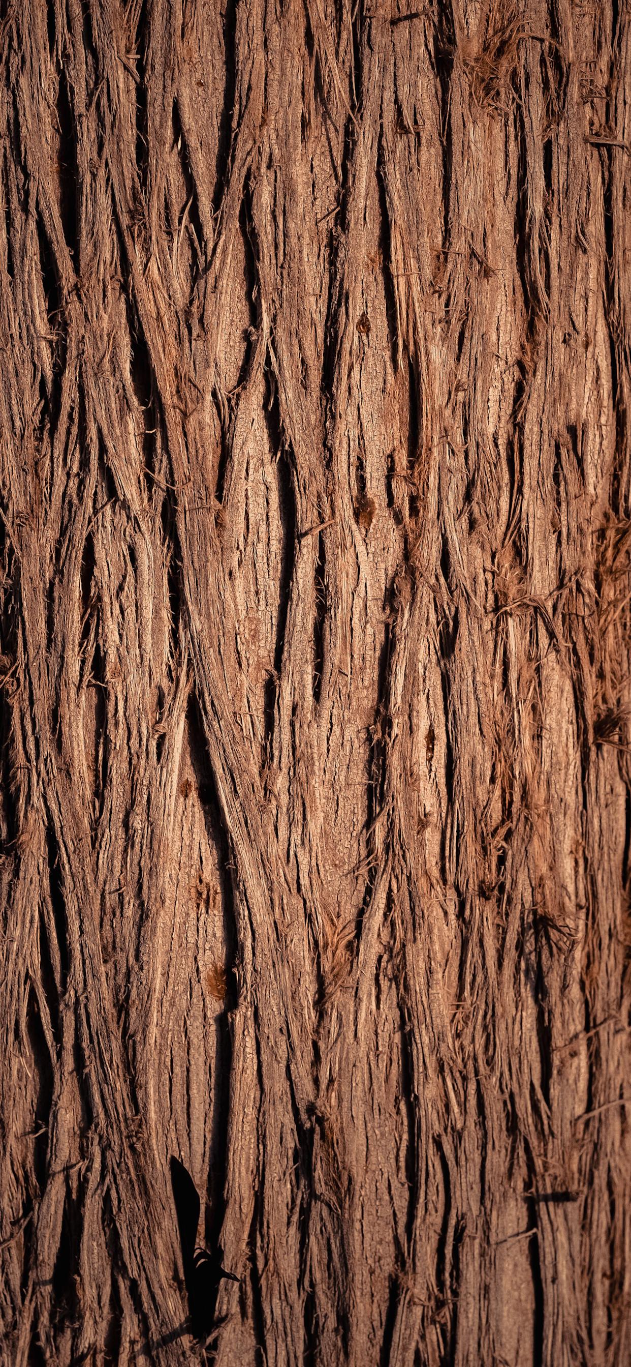 iPhone wallpapers texture wood brown black trunk Fonds d'écran iPhone du 06/03/2020