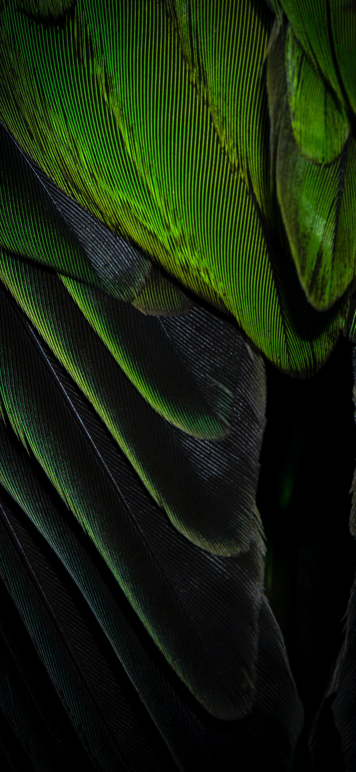 iPhone wallpapers feather green black Fonds d'écran iPhone du 03/04/2020