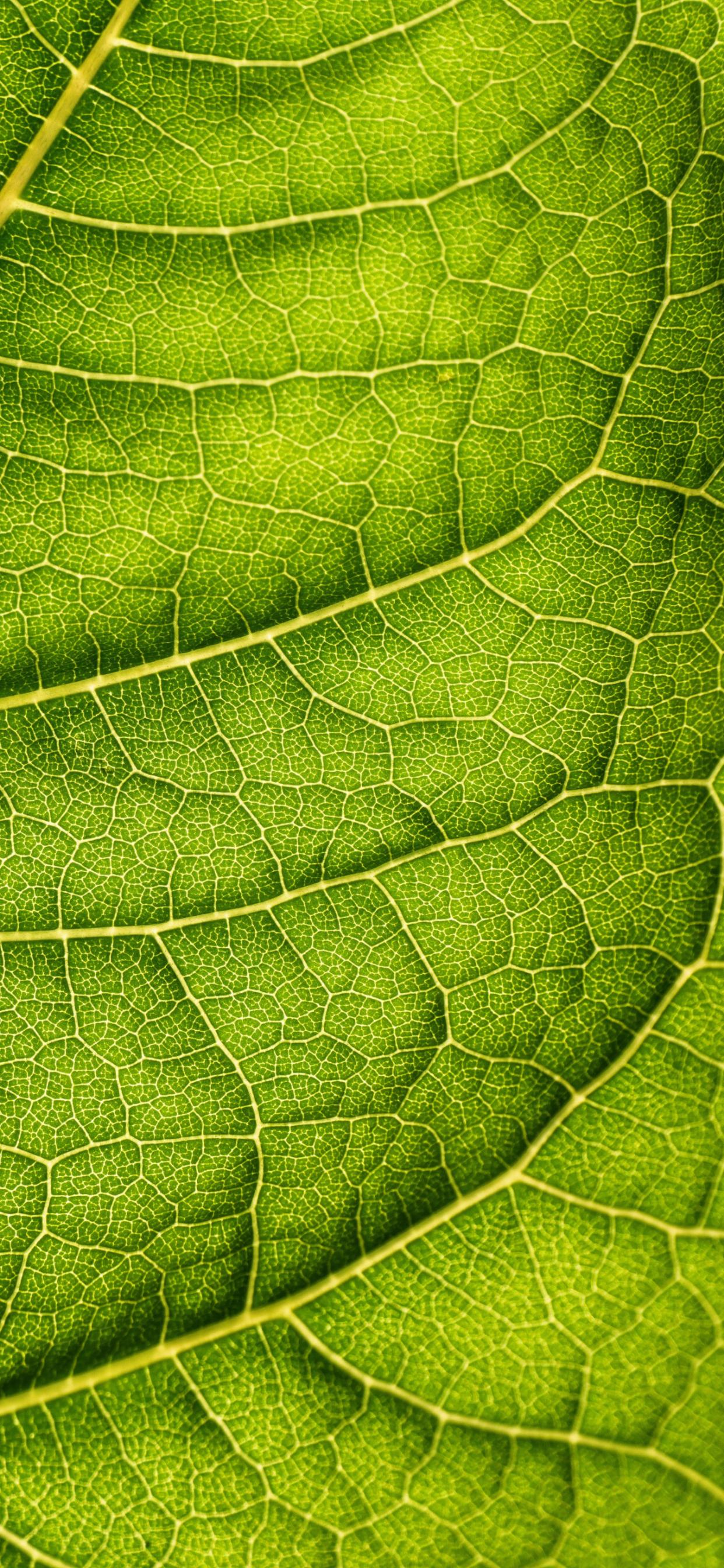 iPhone wallpapers texture leaf back Fonds d'écran iPhone du 18/05/2020