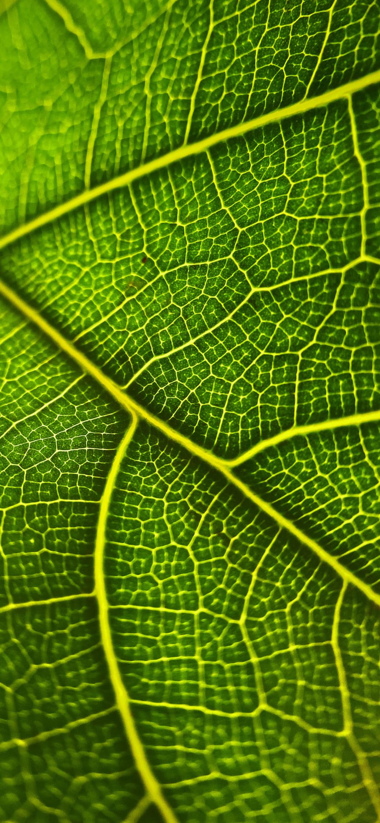 iPhone wallpapers texture leaf front Fonds d'écran iPhone du 18/05/2020