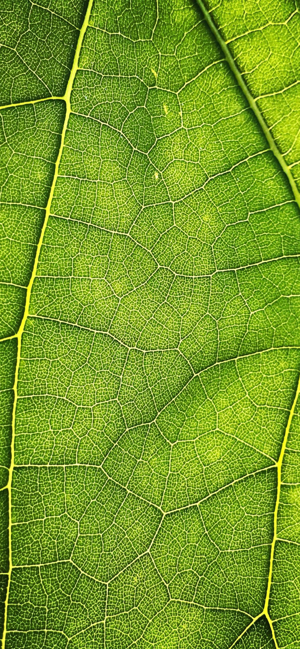 iPhone wallpapers texture leaf middle Fonds d'écran iPhone du 18/05/2020